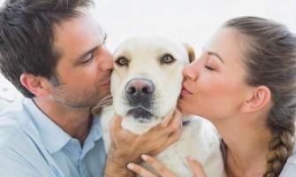 Γιατί οι σκύλοι προτιμούν το χάδι από το φαγητό;