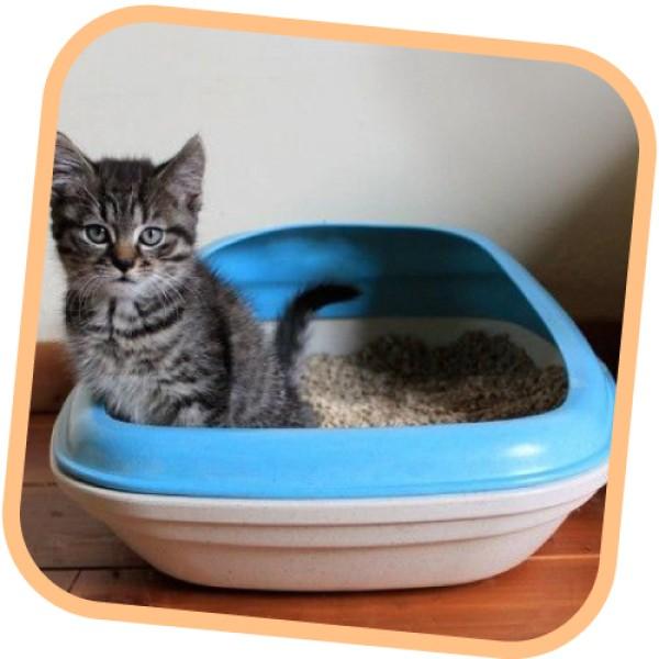 Τουλέτα Γάτας Beco Litter Tray