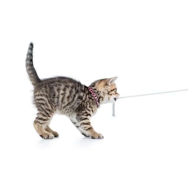 Περιλαίμιο Γάτας Max & Molly Zebra