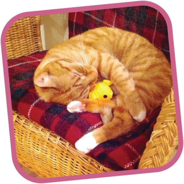 Freddie the Fish - Παιχνίδια Γάτας Catnip Beco Family