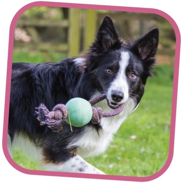 Παιχνίδι Σκύλου Beco Ball on Rope