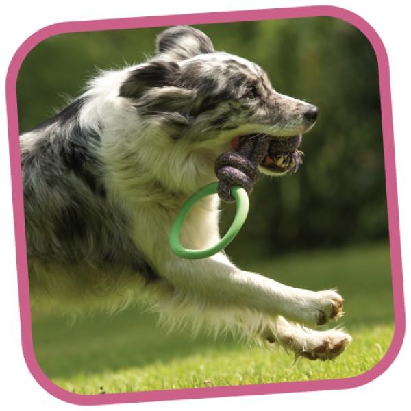 Παιχνίδι Σκύλου Beco Hoop on Rope