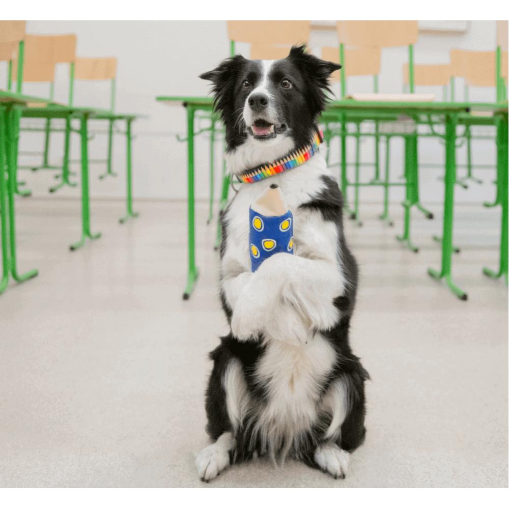 Οδηγός Περιπάτου Σκύλου Max & Molly Crayons