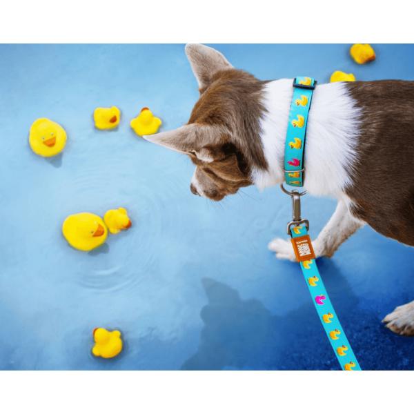 Οδηγός Περιπάτου Σκύλου Max & Molly Ducklings