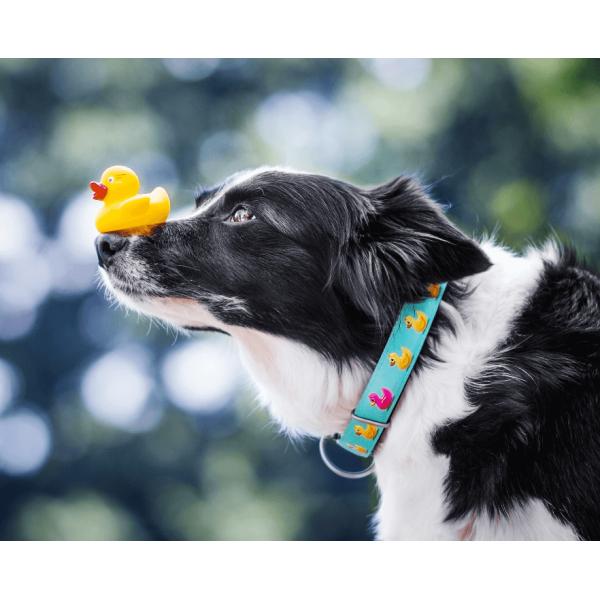 Περιλαίμιο Σκύλου Max & Molly Ducklings