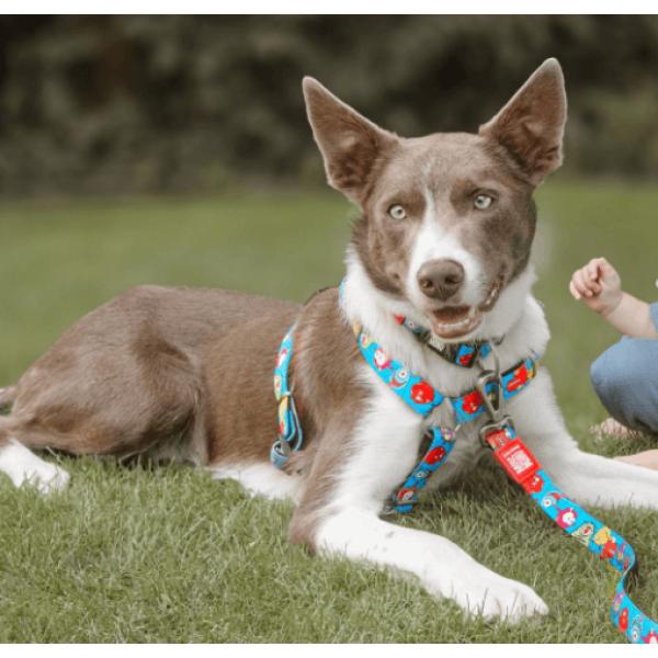 Οδηγός Περιπάτου Σκύλου Max & Molly Little Monsters
