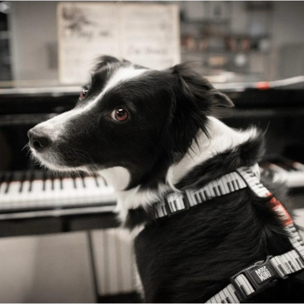Επιστήθιο Σκύλου Max & Molly Piano
