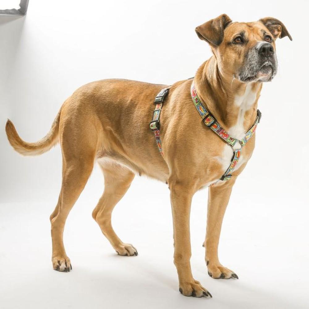 Επιστήθιο Σκύλου Max & Molly Retro Pink