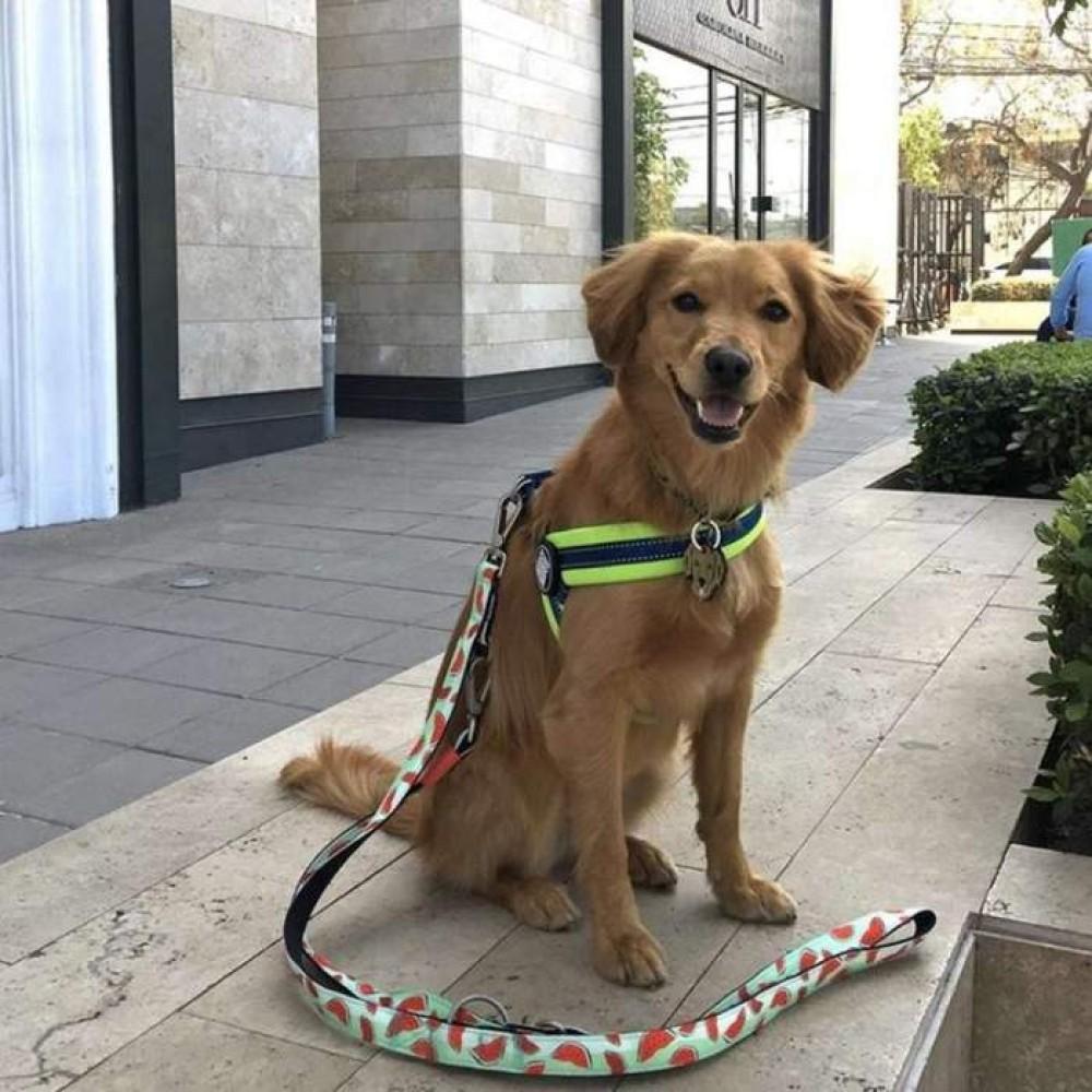 Οδηγός Περιπάτου Σκύλου Max & Molly Multi Function Watermelon