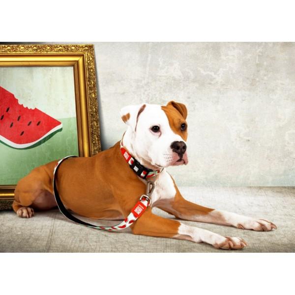Επιστήθιο Σκύλου Max & Molly Watermelon
